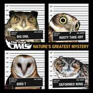 The Four Owls - Natures Greatest Mystery